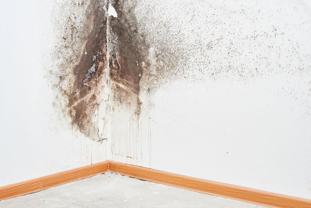 mold-remediationgreensboronc