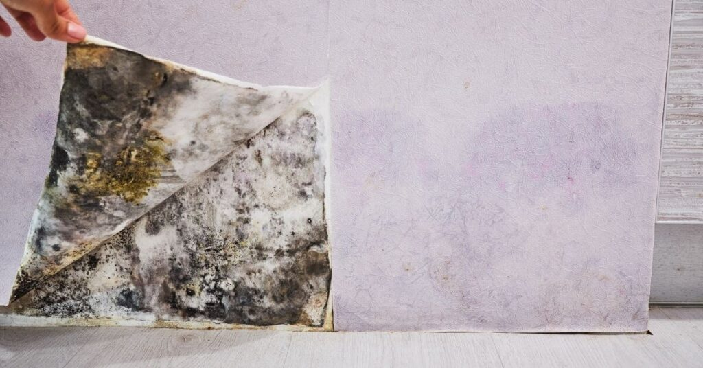 mold removal firms in Greensboro NC